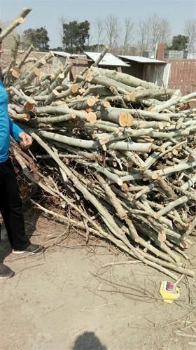 قیمت چوب زغالی