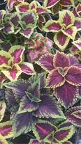 تولید انواع گل و گیاه آپارتمانی و فضای سبز - 1