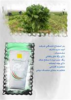 واردکننده بذر صیفی جات و سبزیجات