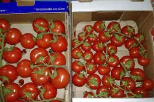خریدار گوجه فرنگی جهت صادرات به روسیه