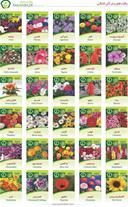 بذر یونجه - بذر سبزی و صیفی - بذر گیاهان دارویی