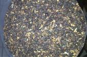 فروش بذر گلابی - قیمت بذر گلابی