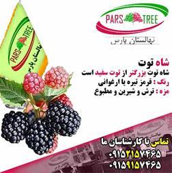 شاه توت ، فروش نهال شاه توت ، Black mulberry