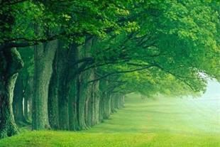 طبیعتی زیبا آینده ای زیبا شبیه عکس