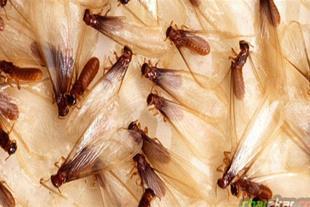 سم پاشی برای از بین بردن حشرات موذی خانگی