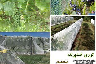 توری جمع آوری محصولات کشاورزی - توری شید تورینه