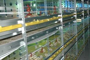 فروش تخم نطفه دار،تولید دستگاه جوجه کشی