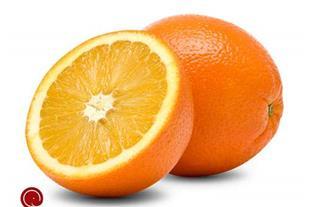 پرتقال تامسون داراب