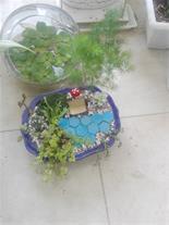 کاکتوس کده سمنان و گیاهان خاص