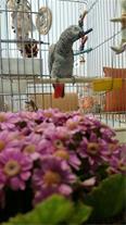 فروش تخم نطفه دار طوطی نژاد ماکائو و کاسکو