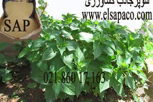 سوپر جاذب کشاورزی - SAP