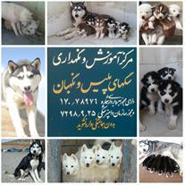 بزرگترین مرکز پرورش سگ هاسکی در ایران