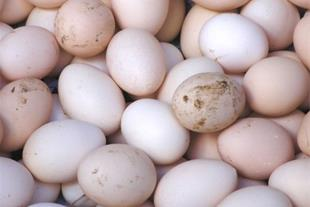 خرید و فروش تضمینی تخم نطفه دار
