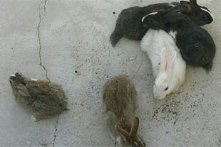 فروش بچه خرگوش