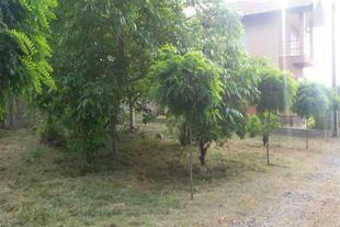 خرید زمین شهرکی جنگلی در نوشهر - 1