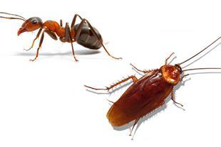 سم مورچه کش و سوسک کش مکس کیلر