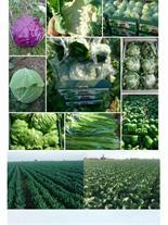 فروش محصولات کشاورزی