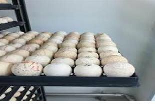 خرید و فروش تخم نطفه دار بوقلمون