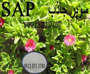 سوپر جاذب - سوپر جاذب کشاورزی - 1