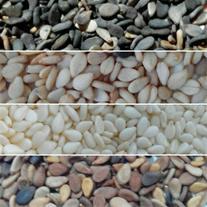 فروش انواع کنجد و دانه های روغنی