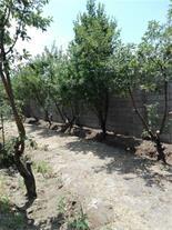 فروش باغچه میوه - 1