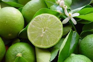 فروش لیمو ترش در ایران