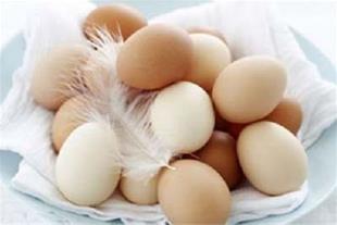 توزیع تخم نطفه دار در سراسر کشور