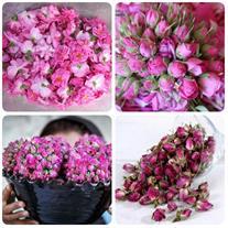 فروش گل محمدی درجه یک