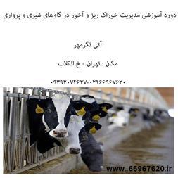 آموزش مدیریت خوراک ریز و آخور در گاو شیری - 1