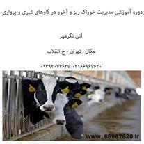 آموزش مدیریت خوراک ریز و آخور در گاو شیری
