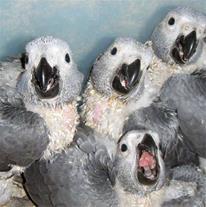 فروش تخم نطفه دار پرندگان