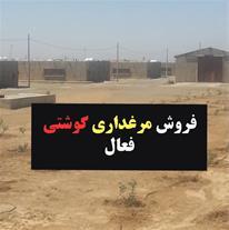 فروش مرغداری گوشتی در اصفهان