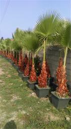 تولید و فروش گل و گیاه - 1