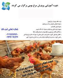 آموزش ایجاد کارگاه پرورش مرغ بومی - 1