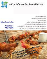 آموزش ایجاد کارگاه پرورش مرغ بومی