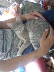 گربه ماده چهار ماهه - 1