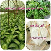 آموزش پرورش گیاهان آپارتمانی