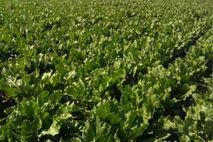 فروش زمین کشاورزی آبی 3هکتار
