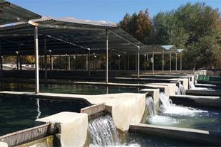 فروش یا معاوضه مزرعه 30 تنی ماهیان خاویاری