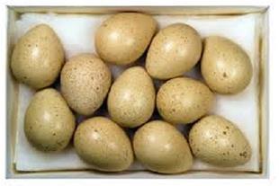 فروش تخم نطفه دار تضمینی