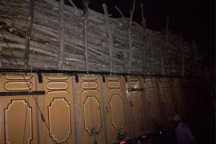 فروش چوب اوکال و زیتون