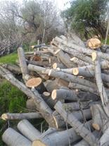 خریدار چوب اوکال