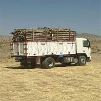 خرید انواع چوب اکالیپتوس بید تبریزی
