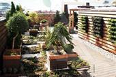 کارگاه فضای سبز عمودی&Roof Garden