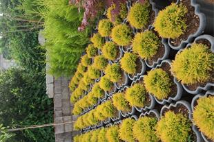 خرید و فروش گل و گیاه