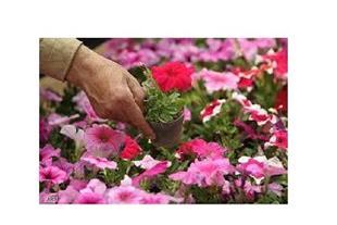 تولید گل و گیاه زینتی