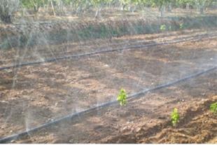 لوله پیفلکس بارانی زعفران و گیاهان پایه کوتاه