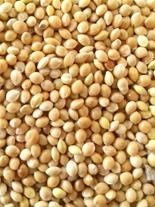 فروش عمده بذر کتان