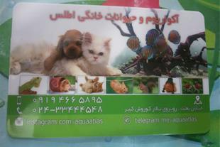 فروش حیوانات خانگی و قفس در زنجان