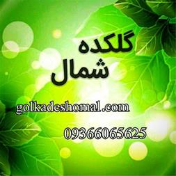 فروش انواع گیاهان و درختچه های زینتی,درختچه ها - 1